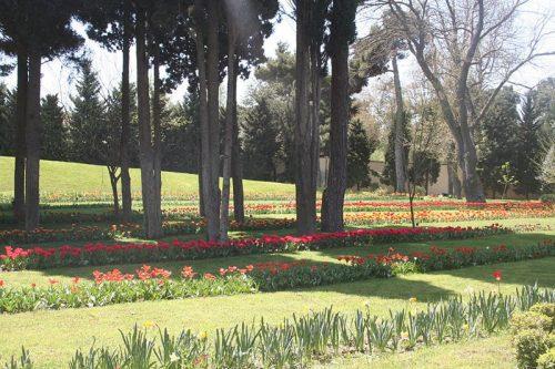 پارک-مفاخر-باکو---THE-HONORARY-CEMETERY3